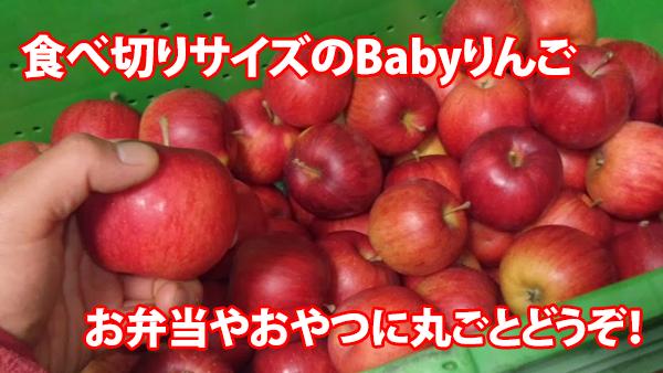 babyりんご